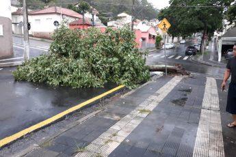 Árvores-Mairinque-Chuva-Queda Árvore Mairinque
