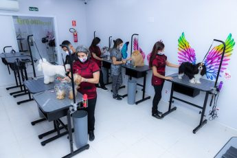 Escola de Estética Animal-Uau-Sorocaba-ONG